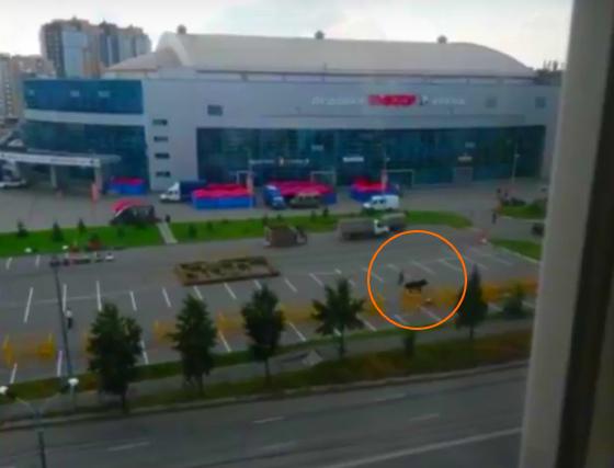 Бык, привезенный наагровыставку, убежал изклетки— Челябинская коррида