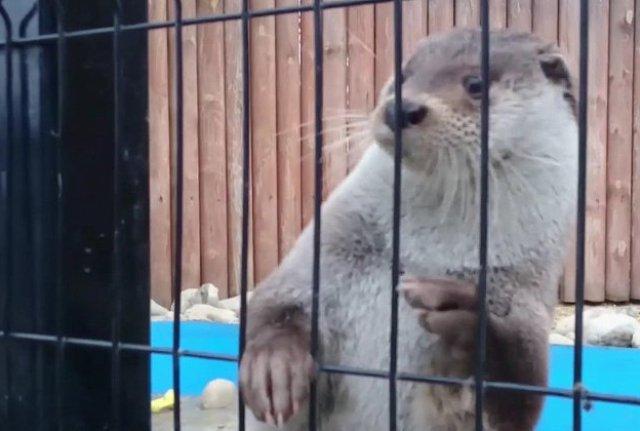Выдра Ваня изЧелябинского зоопарка предсказал, когда выпадет снег