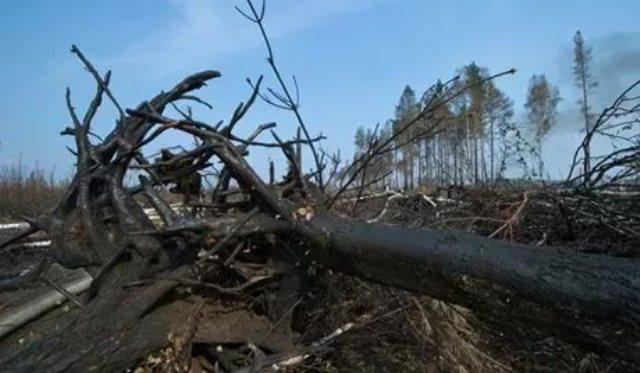 ВМЧС РФ недовольны позицией властей Челябинской области относительно лесных пожаров