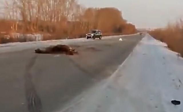 ВЧелябинской области ученик налегковом авто сбил табун лошадей