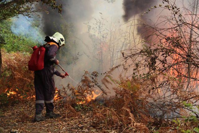 5 лесных пожаров потушили наЮжном Урале засутки