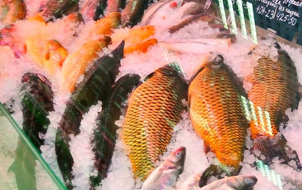 почему сегодня не клюет рыба