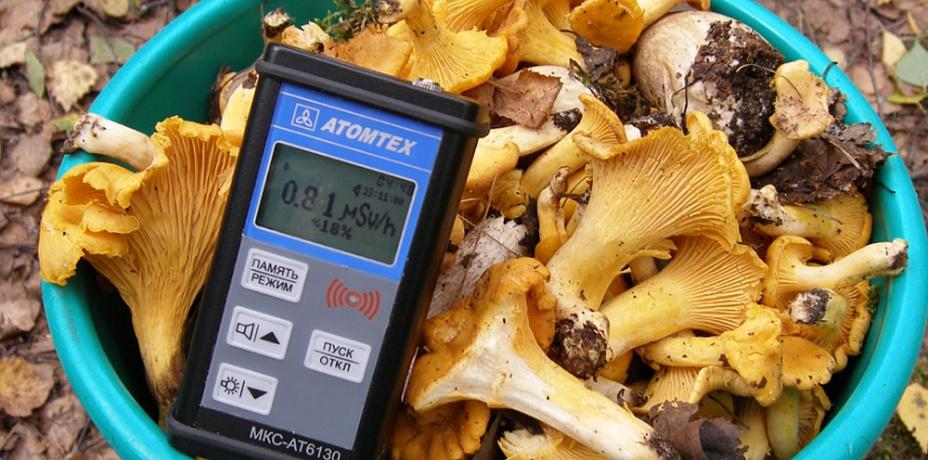 Южноуральские грибы просят проверять на радиацию