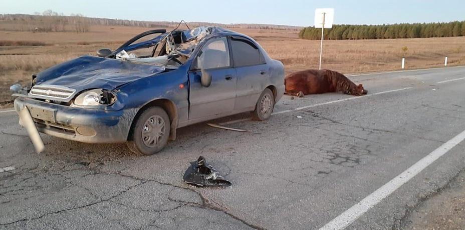 Легковушка столкнулась с лошадью на трассе в Челябинской области